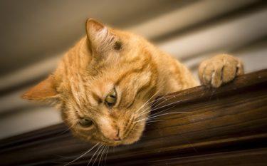『キャプテン・マーベル』猫のグースにまつわる衝撃の事実とは?!