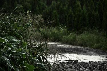 『麒麟がくる』第21話!ついにきた「決戦!桶狭間」のあらすじ