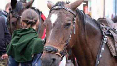 スピルバーグ監督作品「戦火の馬」原作、人と馬の絆物語に涙。