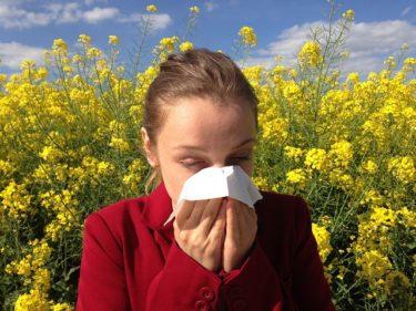 はたらく細胞アニメ5話のあらすじ!スギ花粉アレルギーの脅威とは?